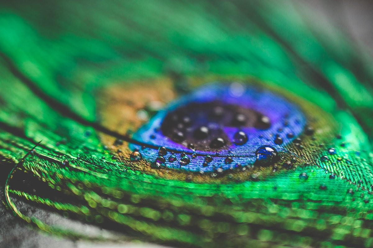 art-of-macro-photography-workshop-with-tiffany-kelly-4
